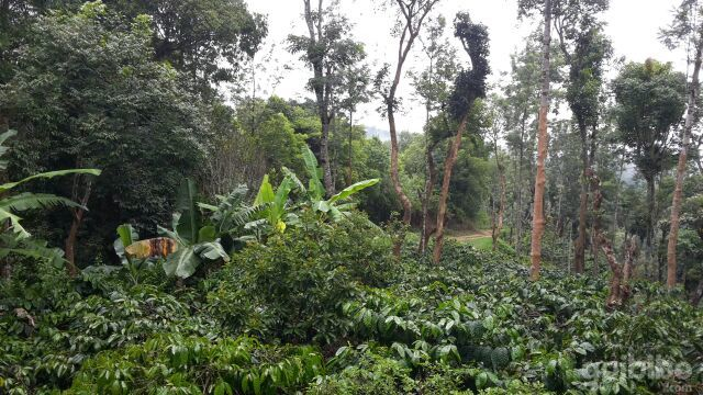 Shree Nidhi Estate Stay Coorg Rooms Rates Photos